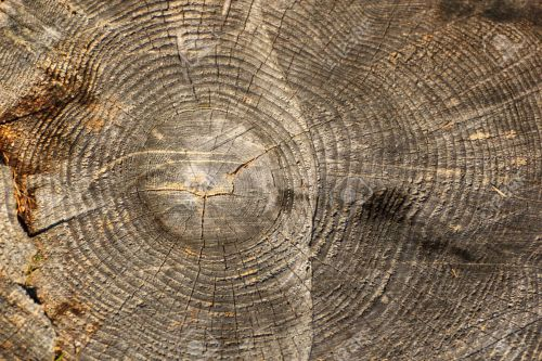 dead-wood-texture-on-a-cut-trunk-found-in-the-forest