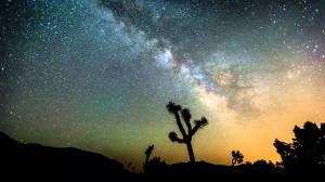 joshua tree stars